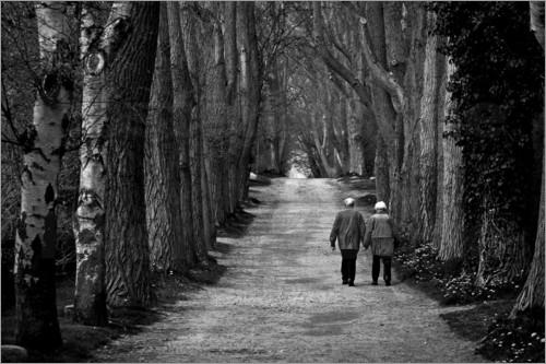 poster-altes-ehepaar-geht-gemeinsam-auf-langer-baumallee-spazieren-312478